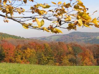 goldener Herbst im Wienerwald