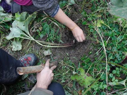 Waldleben - Bäume, Wurzeln und Knospen