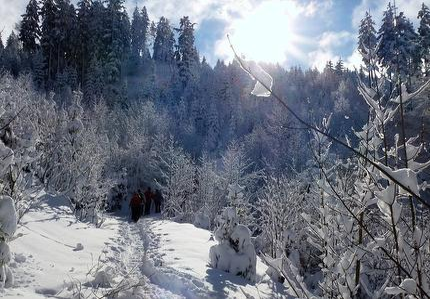 Samerberger Schwarzriesrunde - einfache Schneeschuhwanderung