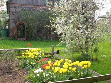 Garten - Blumenbeet