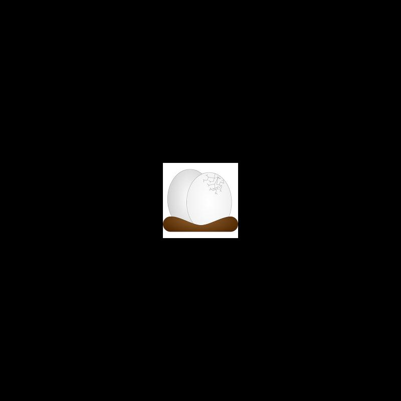 Vom Ei in die Wildnis.jpg / Urheber: Schutzgebietsverwaltung Wildnisgebiet Dürrenstein / Rechteinhaber: © Schutzgebietsverwaltung Wildnisgebiet Dürrenstein