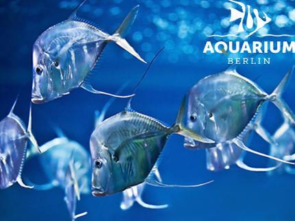 Aquarium Berlin - Eintritt Kind