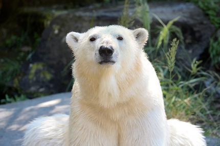 Tierpark Berlin - Tagesticket Erwachsene