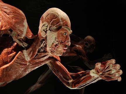 Körperwelten im Menschen Museum Berlin - Ticket ermäßigt (Schwerbeschädigt)