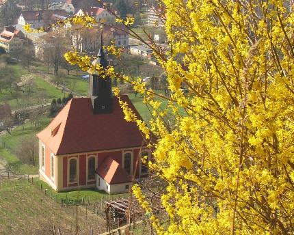 WeinWanderung Pillnitz - Wo Wein mehr als ein Hobby ist
