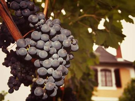 Klassik im Wein (Weinböhla)