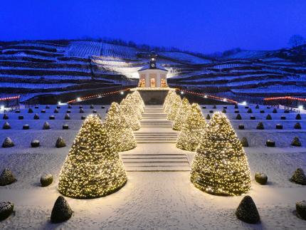 Adventsführung mit  3er- Weinprobe - Sächsisches Staatsweingut Schloss Wackerbarth Kind (7 - 15 Jahre)