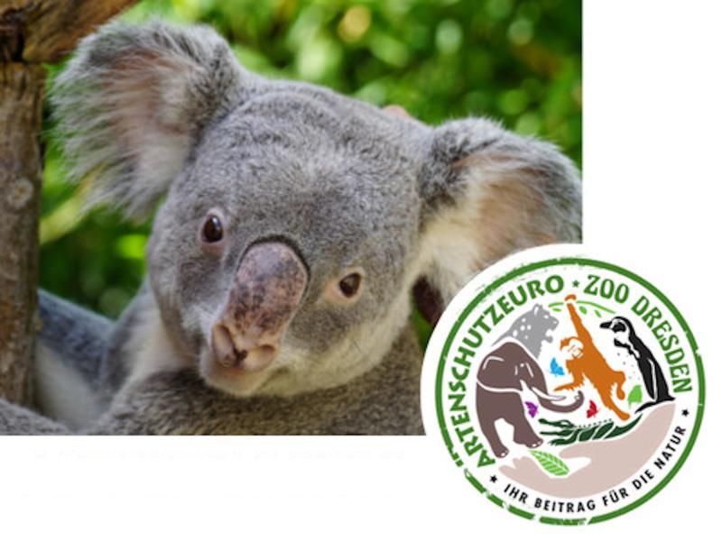 Koala / Urheber: Zoo Dresden / Rechteinhaber: © Zoo Dresden