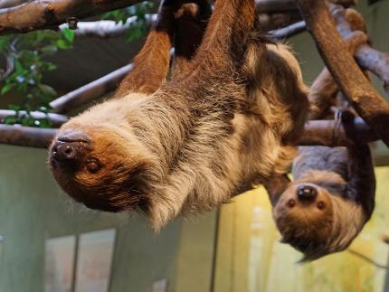 Zoo Dresden - Eintrittskarten ohne Artenschutzeuro