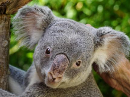 Zoo Dresden - Eintritt Studenten - ohne Artenschutzeuro*