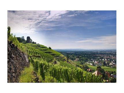 Aus Weinfässern nippen, entlang Sachsens Klippen