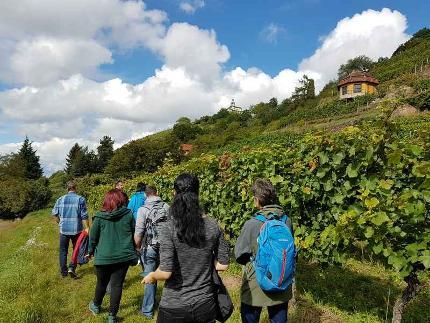 Sächsischer Wander- und Weingenuss