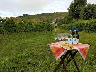 Weinwanderung Radebeul