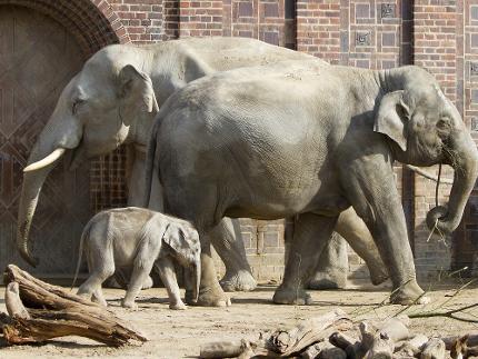 Zoo Leipzig - Tageskarte* - Erwachsene(r)
