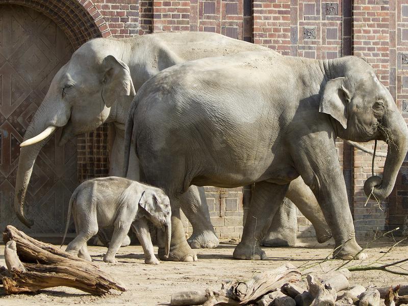 Elefanten / Urheber: Zoo Leipzig GmbH / Rechteinhaber: © Zoo Leipzig GmbH