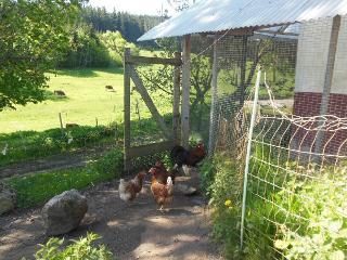 einige tierische Bewohner des Hofes