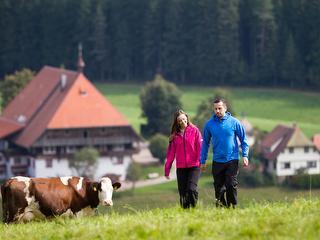 Ausgiebige Spaziergänge in der freien Natur