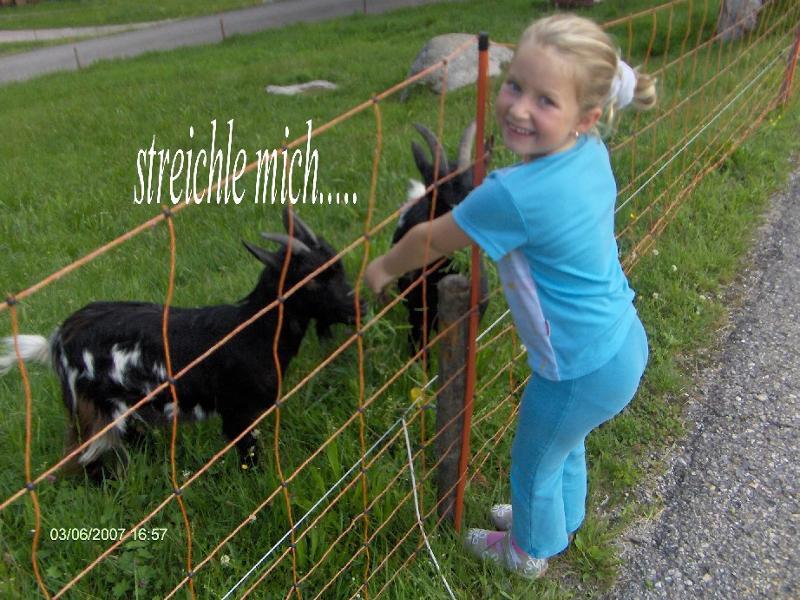 Tiere auf dem Bauernhof - Unsere Zwergziegenbande freut sich auf Ihre Kinder.  All unsere Tiere sind lieb und Zahm. Sie lieben es gestreichelt, gefüttert und vor allem geschmust zu werden. Unser Streichelzoo besteht aus; Zwerghasen,Hühnern,unsere große Zwergziegenbande und unserem lieben Kinderfreundlichen Hund Felix. All unsere Tiere freuen sich auf ihre Kinder.