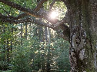 Wunderschöne Mischwälder, in der direkten Umgebung, laden zum Wandern ein.