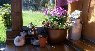 kleine Blumenoase