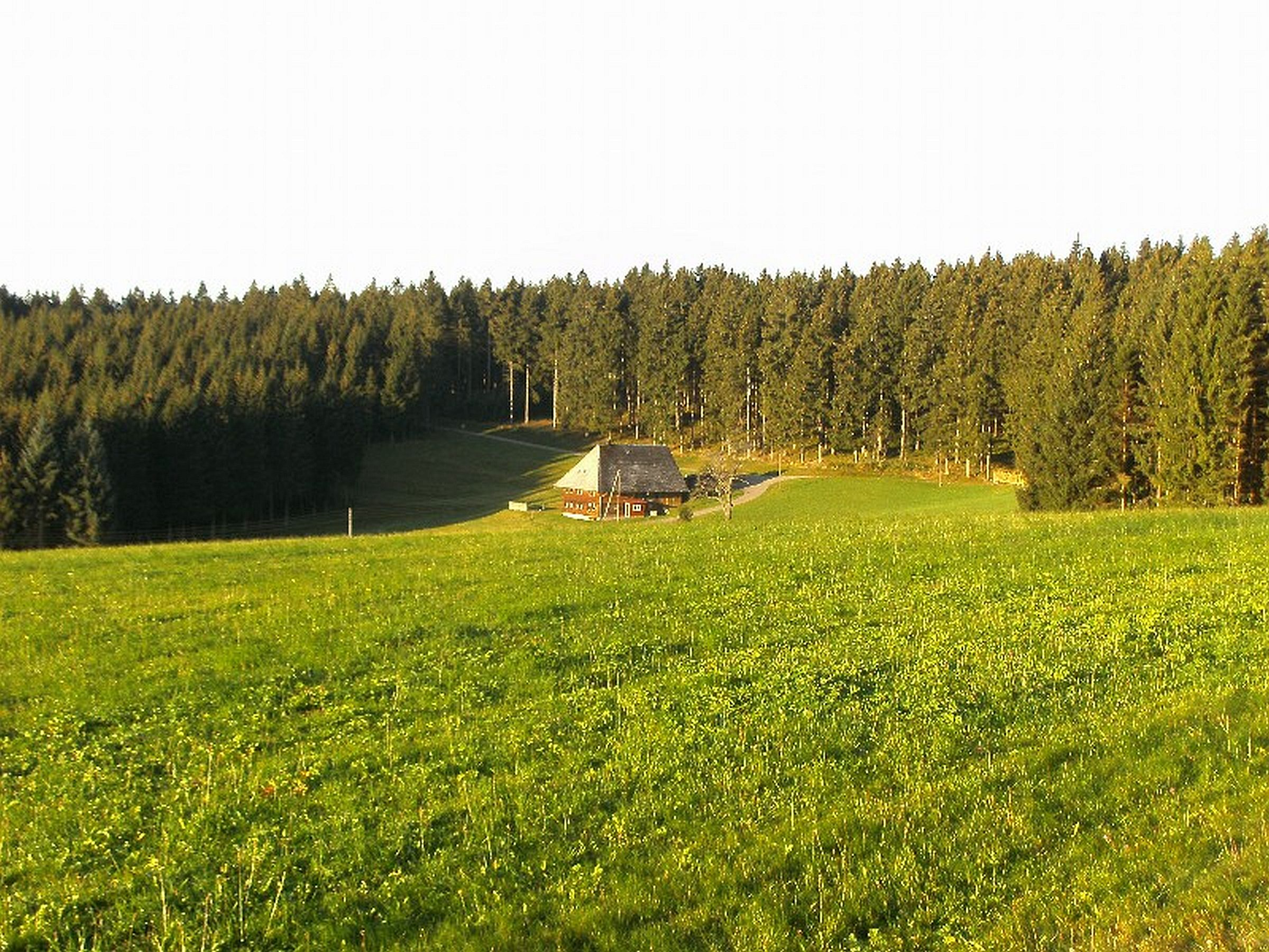 Ferienwohnung Haus Brunhilde App 3 - Sänger, (Schönwald). Nichtraucher-Ferienwohnung 44qm, 1 Schlafraum, (605139), Schönwald, Schwarzwald, Baden-Württemberg, Deutschland, Bild 5