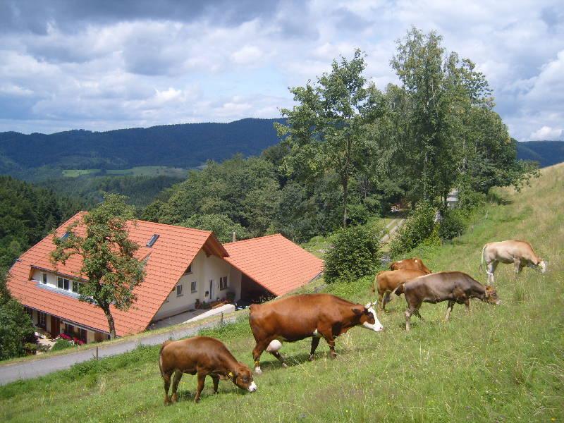 Langenberghof, (Oberharmersbach). Ferienwohnung mi