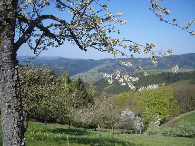 Ferienwohnung Langenberghof (Oberharmersbach). Ferienwohnung mit 50qm, 1 Schlafzimmer, für max. 2 Person (761497), Oberharmersbach, Schwarzwald, Baden-Württemberg, Deutschland, Bild 7