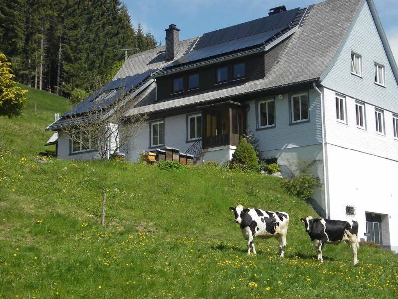 BlackForest-Stube - im Schwarzwald daheim