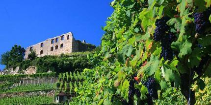 Staufener Weinwanderung