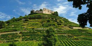Staufener Weinwanderung / Urheber: Original Landreisen AG / Rechteinhaber: © Original Landreisen AG