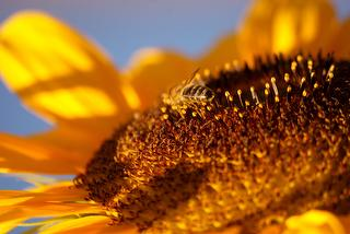 Beste Voraussetzungen für leckeren Honig