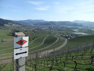 Direkt vor der Haustüre befinden sich weitläufige Weinberge - mit Blick über den Schwarzwald