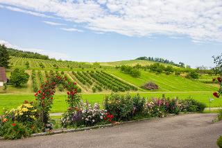 Ferienwohnung mit Bauerngarten in der Ortenau