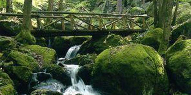 Wanderung durch die Gaishöll Wasserfälle und den Weinschwarzwald