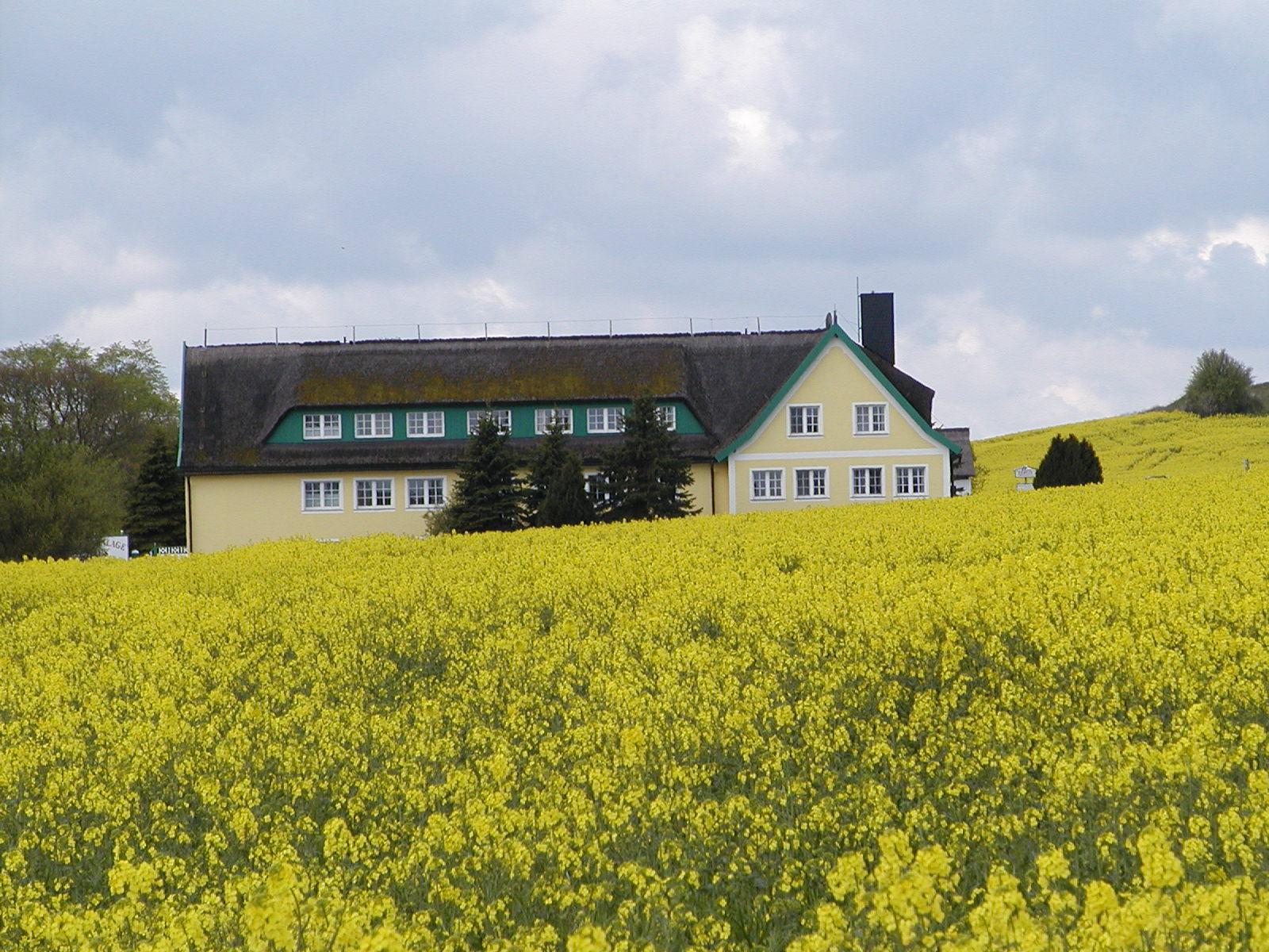 Ferienwohnung Ferienanlage Alt Reddevitz, (Alt Reddevitz). Ferienwohnung Neukölln, 35 qm, 1 Schlafzimmer (1029663), Alt Reddevitz, Rügen, Mecklenburg-Vorpommern, Deutschland, Bild 16