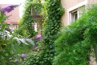 Blick von Terrasse in weinberankten Innenhof