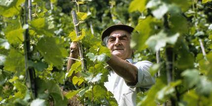 Ein Sommertag im Weinberg (Markgräfler Weinkolleg)