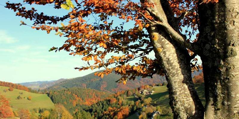 Wanderung: Panorama-Tour am Schauinsland