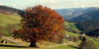 Panoramatour am Schauinsland / Urheber: Ursel Lorenz / Rechteinhaber: © Ursel Lorenz