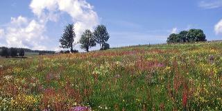 Kräuterwanderung am Schauinsland / Urheber: Natourpur / Rechteinhaber: © Natourpur