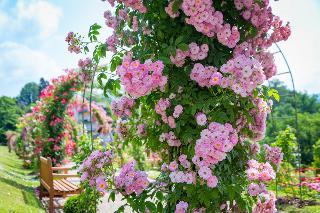 Rosenneuheitengarten im Beutig