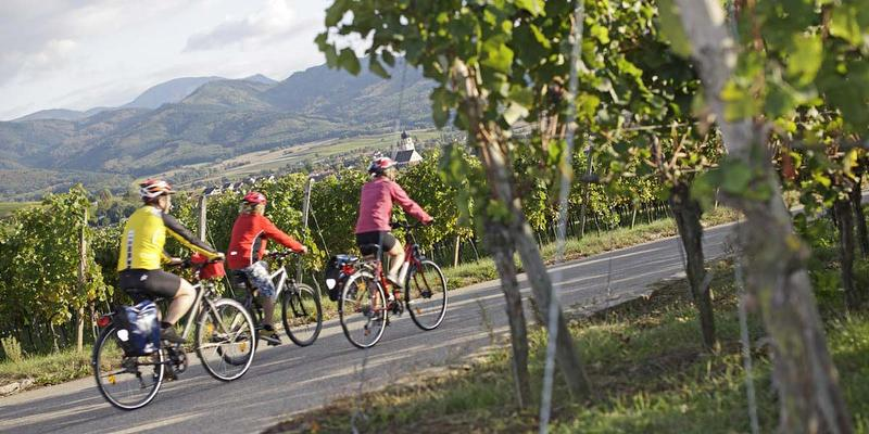 Kulinarische Radtour in vier Gängen im Markgräflerland