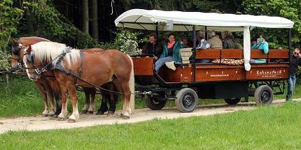 Erlebnisfahrt: In den Frühling mit Pferdekutsche