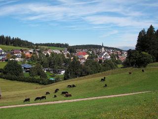 Schönwald im Sommer