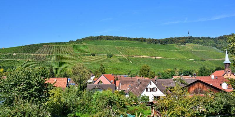 Müllheimer Weinwanderung