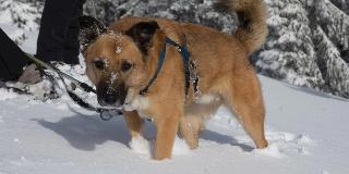 Schneeschuhwanderung mit Hund / Urheber: Schneeschuhakademie Hinterzarten / Rechteinhaber: © Schneeschuhakademie Hinterzarten