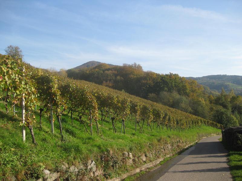 Herbstliches Sasbachwalden