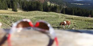 Hundereise: Rundwanderung Hochschwarzwald / Urheber: Original Landreisen AG / Rechteinhaber: © Original Landreisen AG