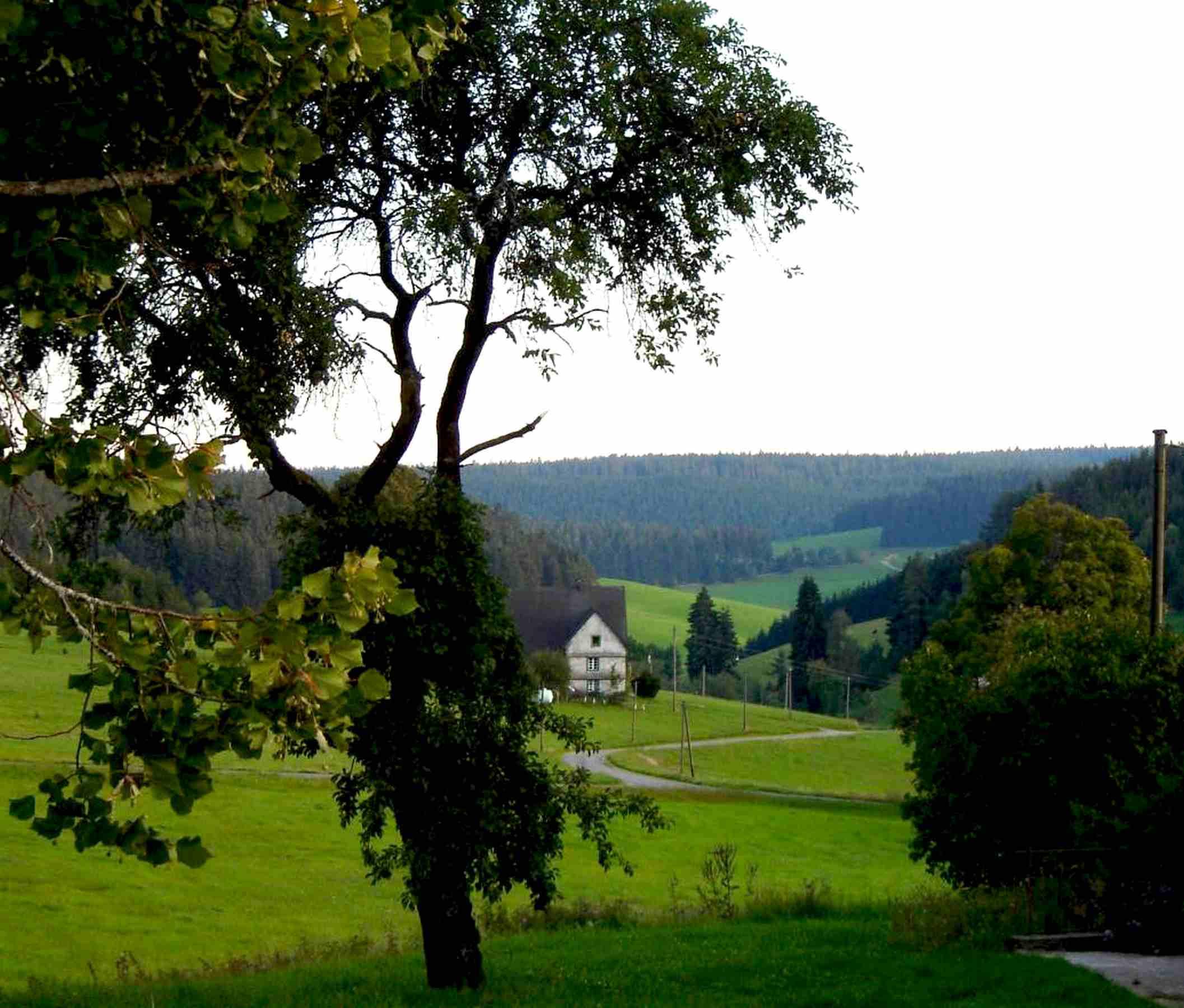 Ferienwohnung Storzenhof, (Unterkirnach). Ferienwohnung, 140qm, 3 Schlafzimmer, max. 8 Personen (2790199), Unterkirnach, Schwarzwald, Baden-Württemberg, Deutschland, Bild 5