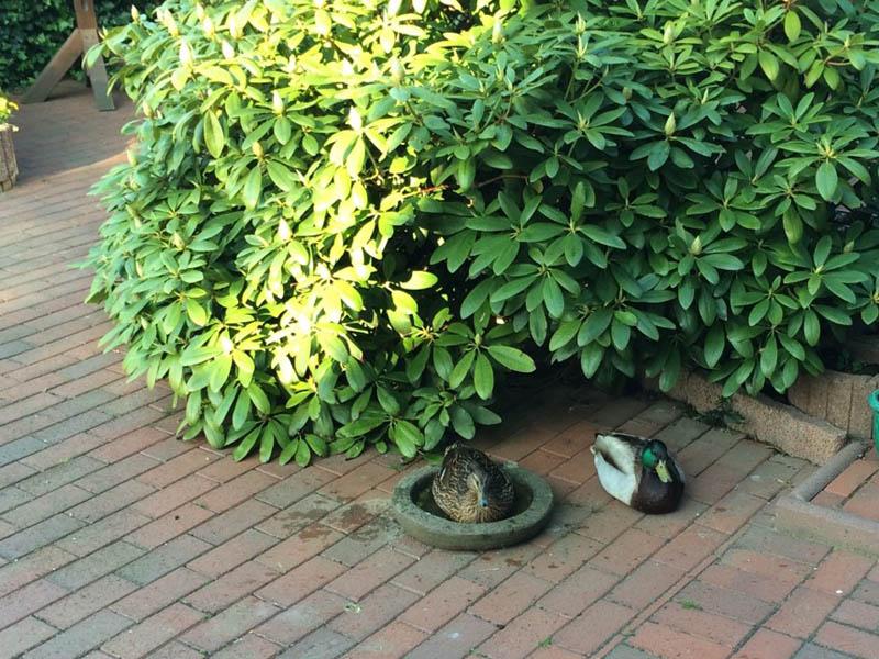 Besuch im Garten!